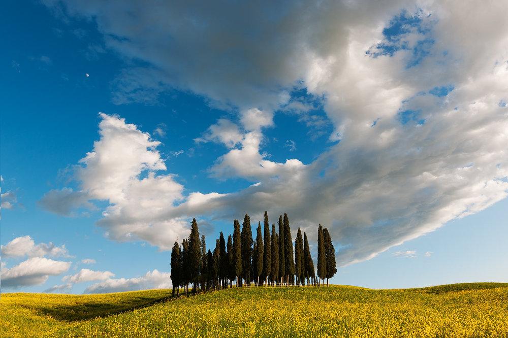 RI1303D-tuscany-cypresses.jpg