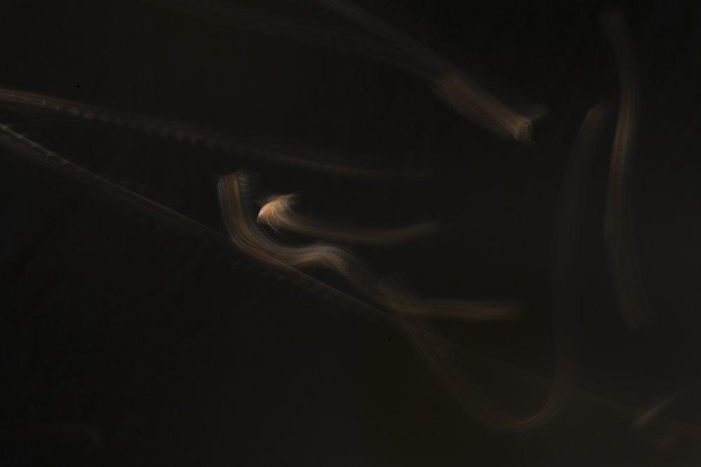 Hive-Ariel_9969 copy 2.jpg