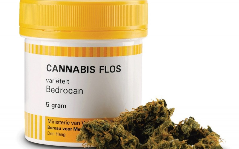 Bedrocan is the Netherlands' sole supplier of medical cannabis -  Photo Credit