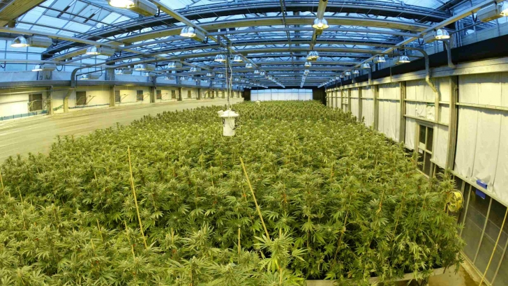 One of GW Pharma's Portuguese greenhouses - Photo Credit