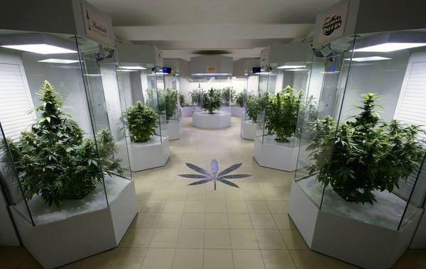 Austria Cannabis. - Dinafem.jpg