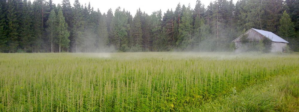 (Field of Finola, Mr. Nice Seedbank)