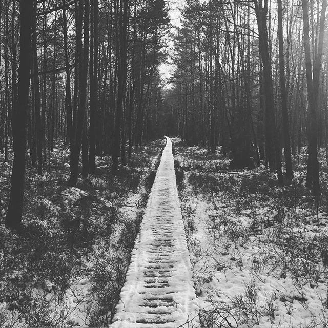 Path through the forest swamp. #adventure #winter #networkium #explorer #lithuania #2016 #blackwhite #nature