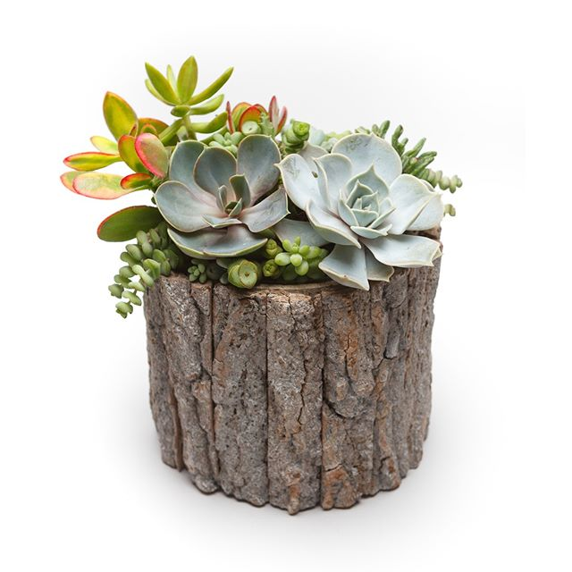 Dead wood. Get this free rustic decoration for your garden by taking a stroll through the yard. 👉https://buff.ly/2Jfdzvb