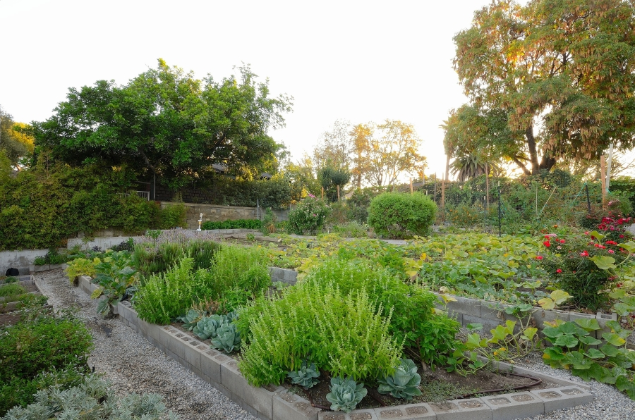 Parkway's Gourmet Organic Garden at sunset.