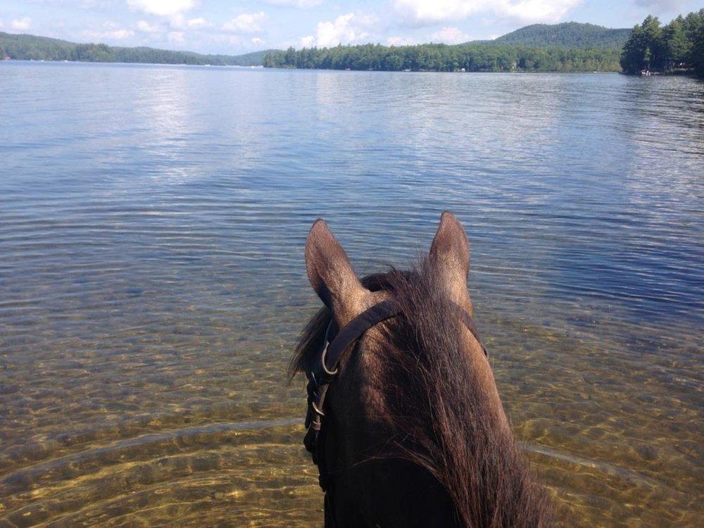 #14 - Horse at lake.jpg