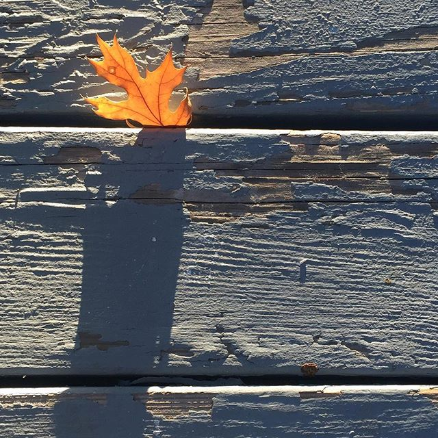 …and continuing with the leaf theme… #lakearrowhead #peelingpaint #sycamore . . . . .  #fineartphg #artlovers #arte #fineart_photobw #artsy #visualart #contemporaryart #fineartphoto #fineart #fineartphotography #myart #artcollector #abstractart #instaartwork #artgallery #artnews #modernart  #conquer_la #weownthenight_la #discoverla #losangelesgrammers #conquer_ca #iphoneography #iphoneonly #iphonesia #focalmarked
