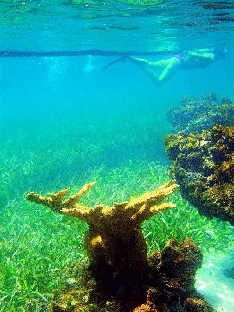 Snorkelling in the Round Hill Reef Garden