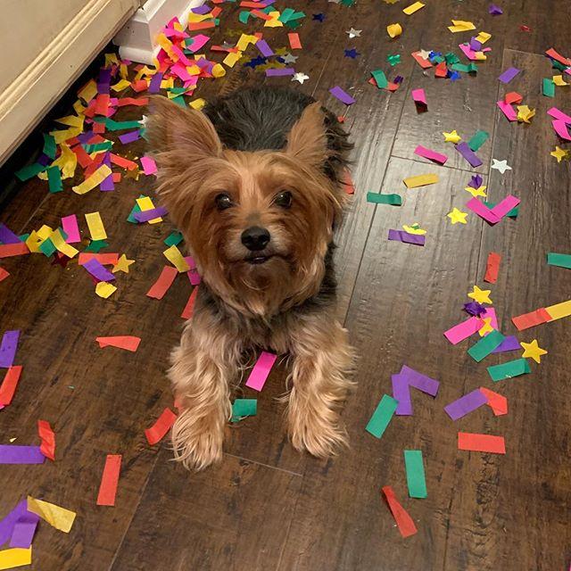 My mom is crazy send help plz @chessrice #yorkiesofinstagram #yorkies #doggo #pupper #dogsofinstagram
