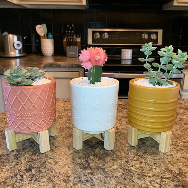 The @target dollar section has the cutest little planters right now 🌵🌸🌱 #blogger #blog #blogging #sundayfunday #plants #succulents #cactus #targetdollarspot #target #homeblogger
