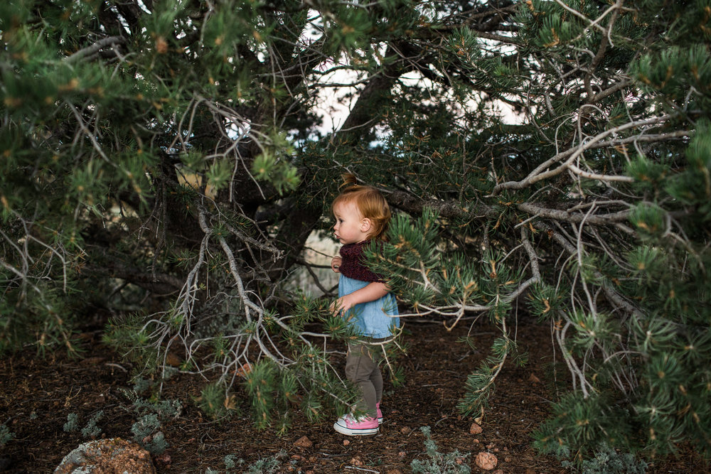 child in pine tree forest colorado