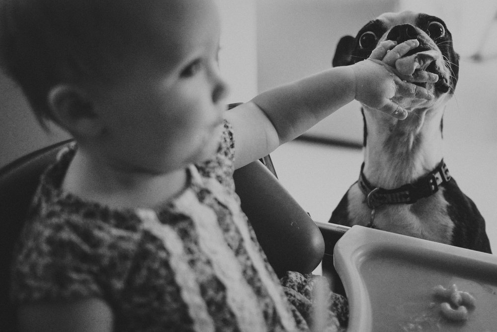toddler feeding mac and cheese to boston terrier