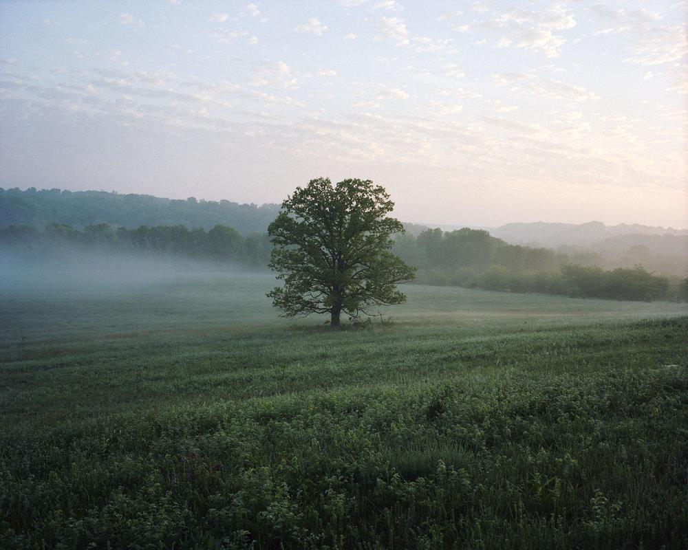 foggy tree001.jpg