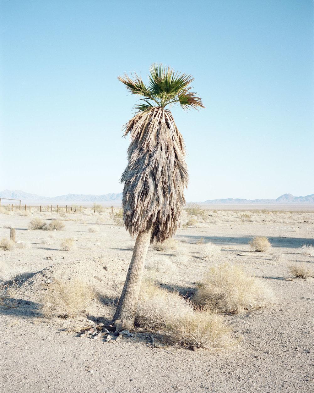 wild palm003.jpg