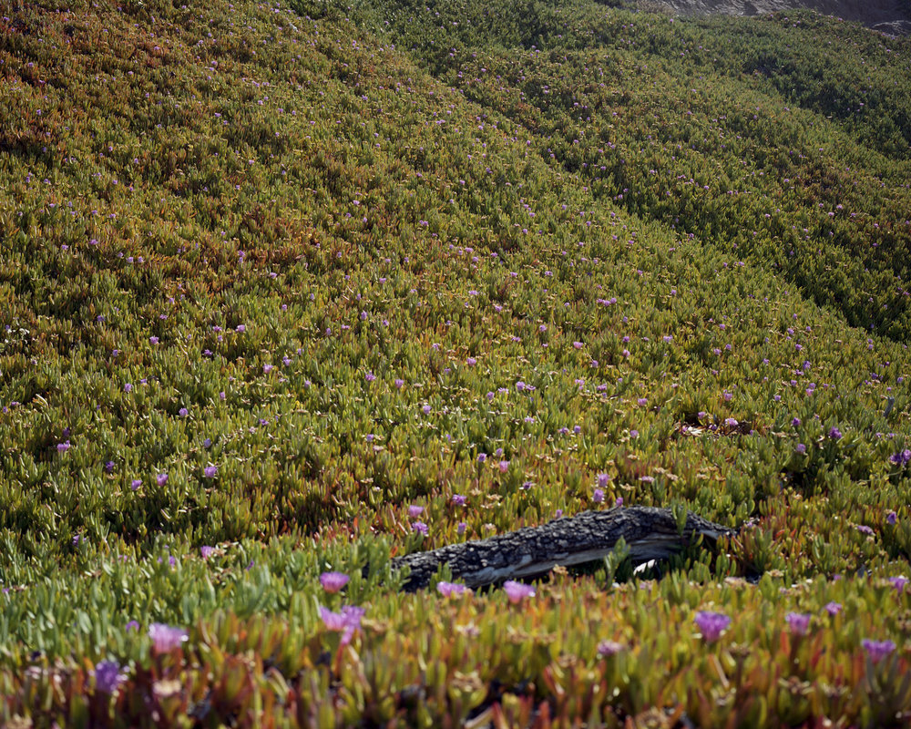 flower field007.jpg