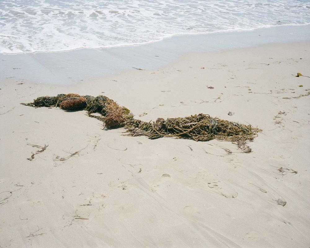 seaweed003.jpg