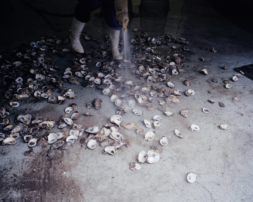 Oyster shells 002.jpg