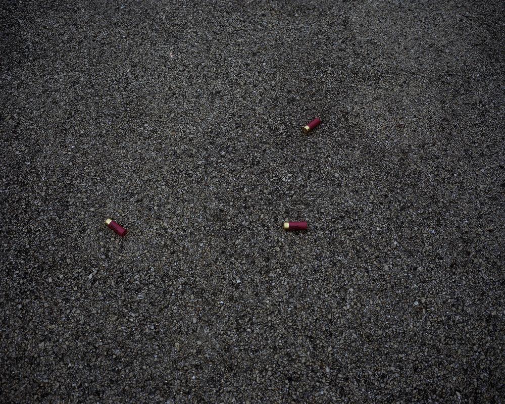 shells 003.jpg