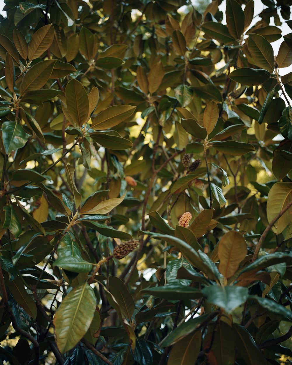 %22banana leaves%22006.jpg