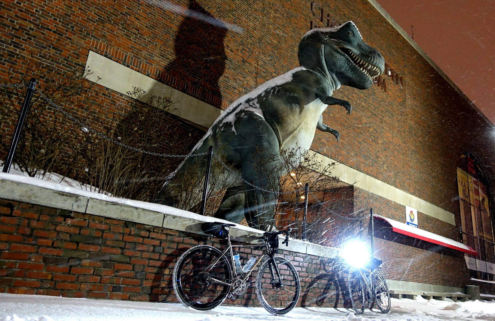 T-Rex in the snowstorm