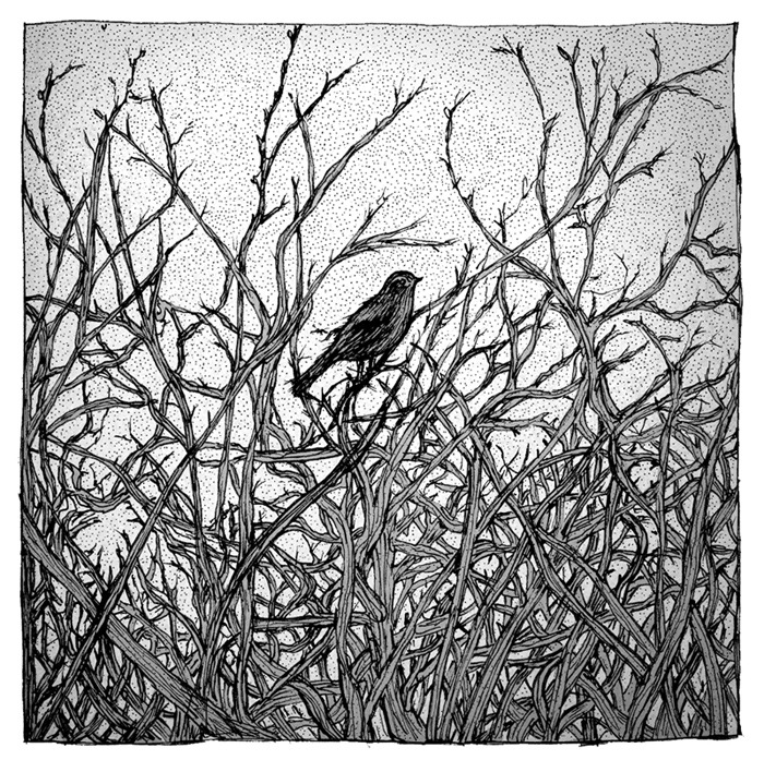 artwork with illustration of a small black bird in a bush by drawn together art collective