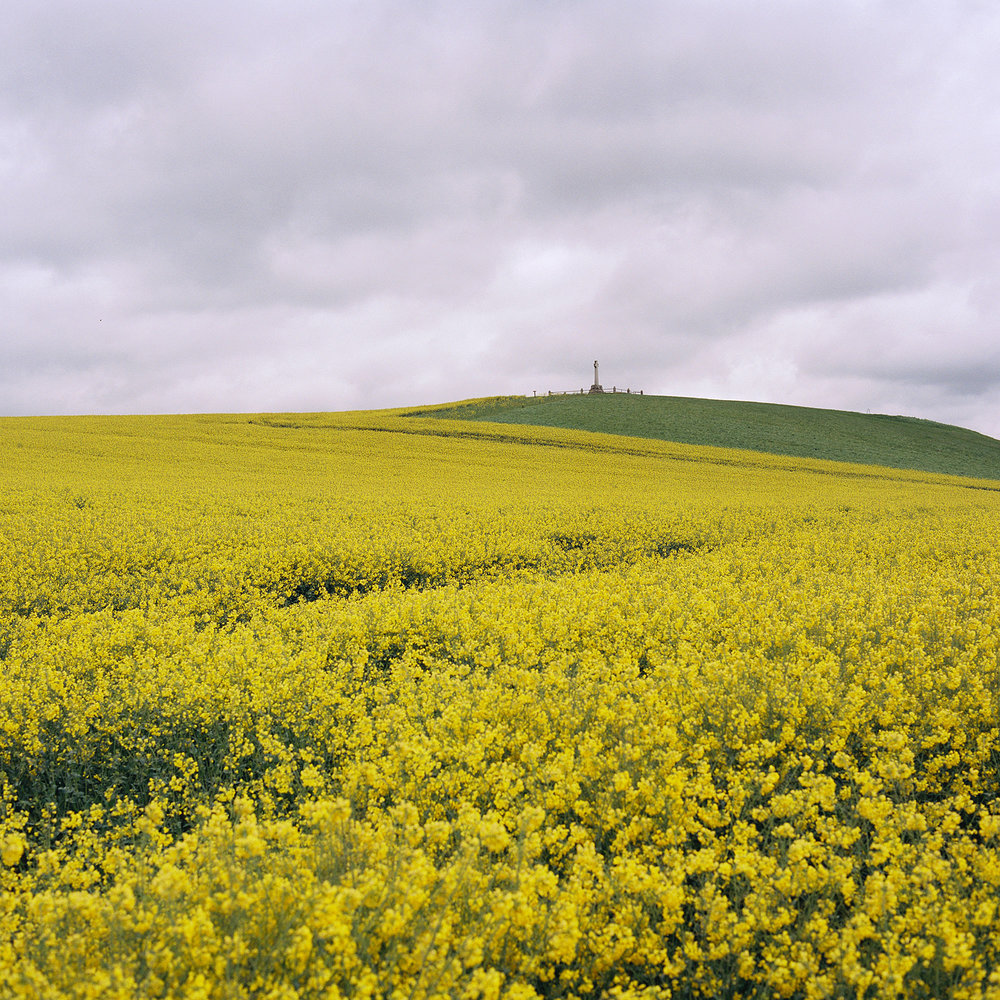 A  eld of oilseed rape beneath The Battle of Flodden memorial in Branxton, Northumberland, England