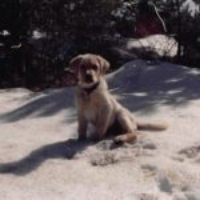 Luke at 9 weeks old in 2003.