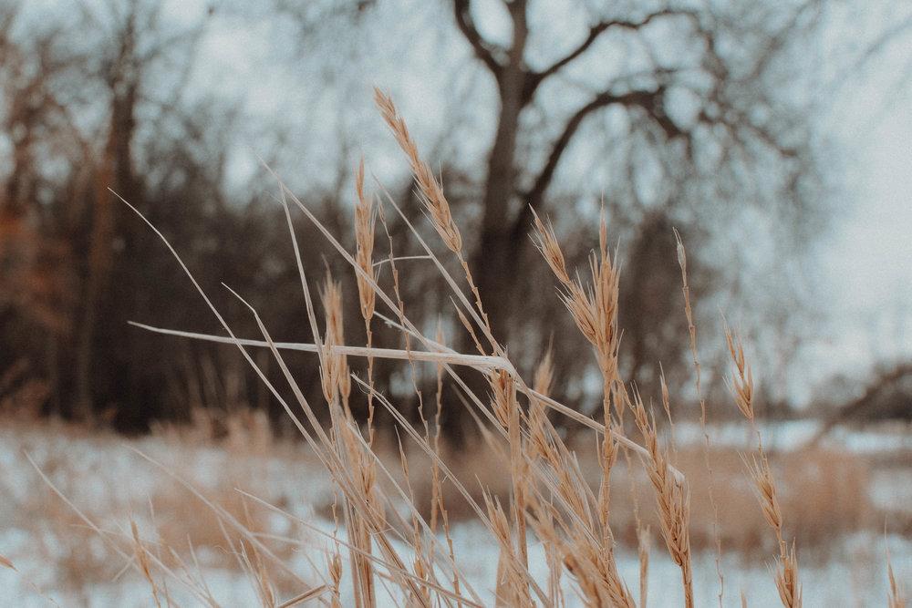 nature-0995.jpg