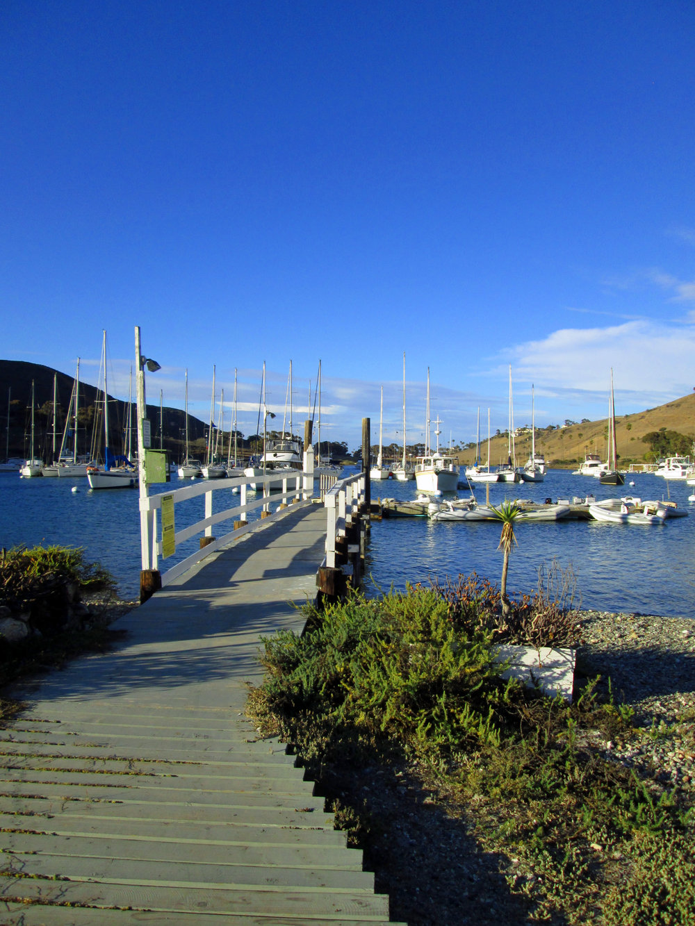 Ballast Point, Cat Harbor.jpg