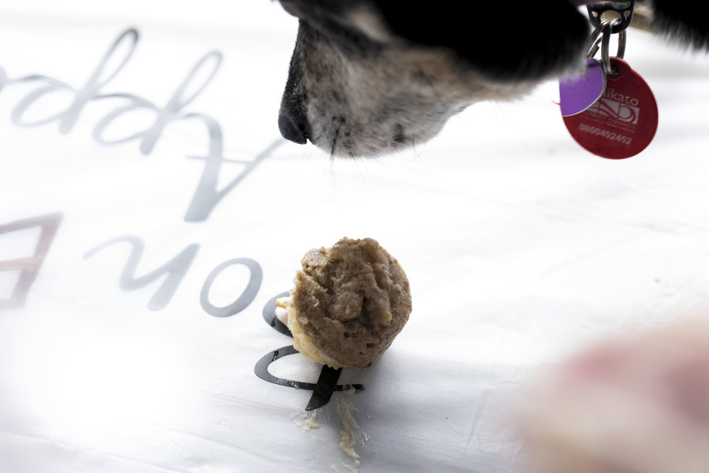 Dog Walk_46_Photo- Ida Larsson White Lynx Photography__LP_8806.jpg