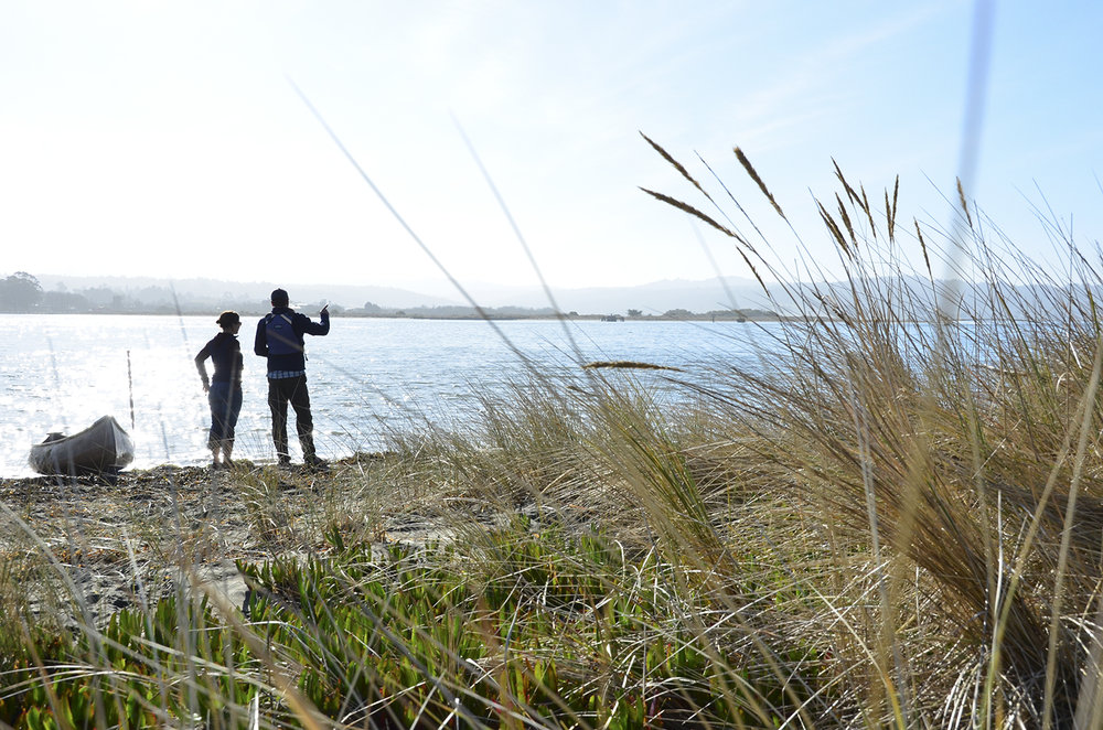 oyster beach samoa humboldt bay