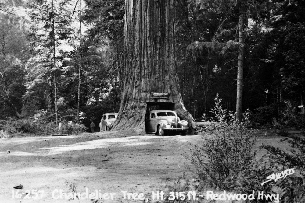 Chandelier Tree.jpg