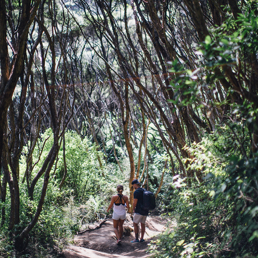hiking through the eucalyptus trees to reach a beautiful secluded beach