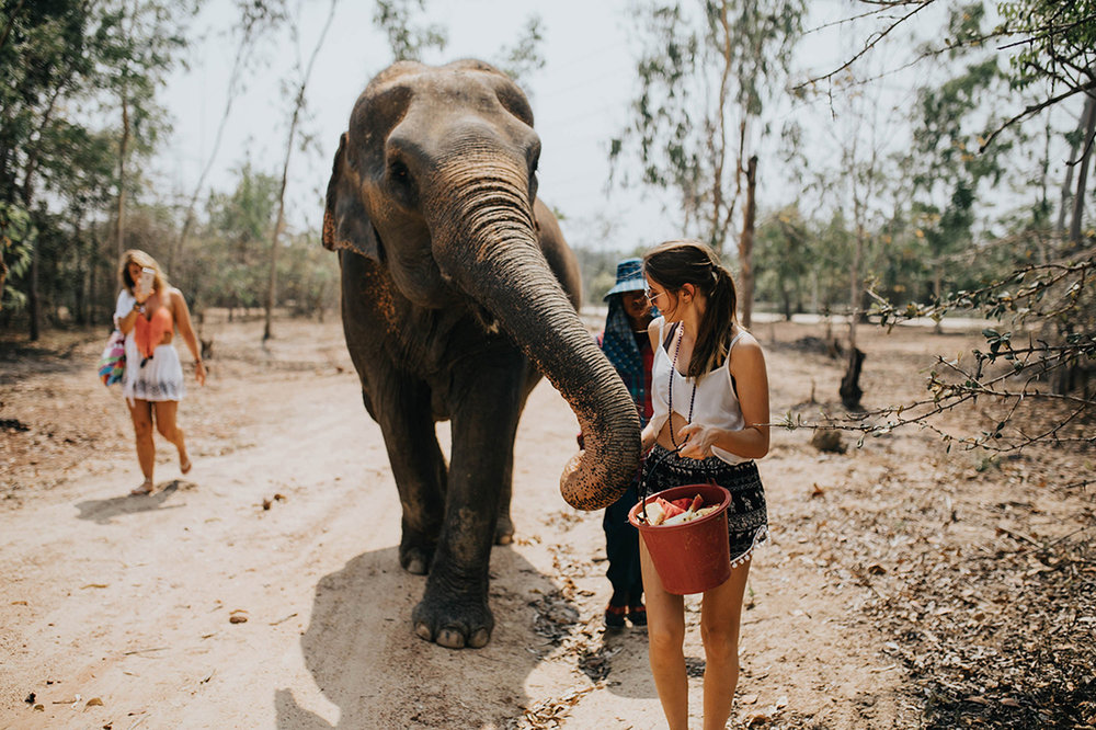 here's me giving fruit to this lovely lady elephant. i'd hold the fruit and she wrapped her trunk around my hand - it was an incredible feeling