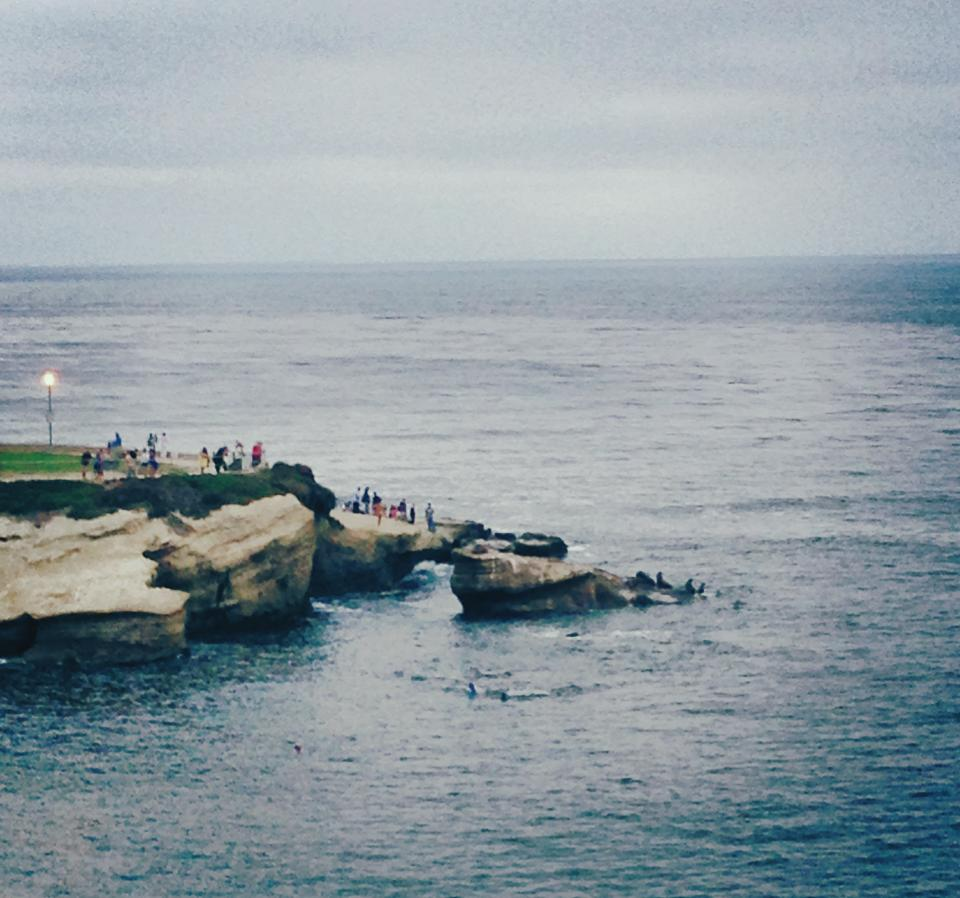 View from Brockton Villa of some of the La Jolla Seals