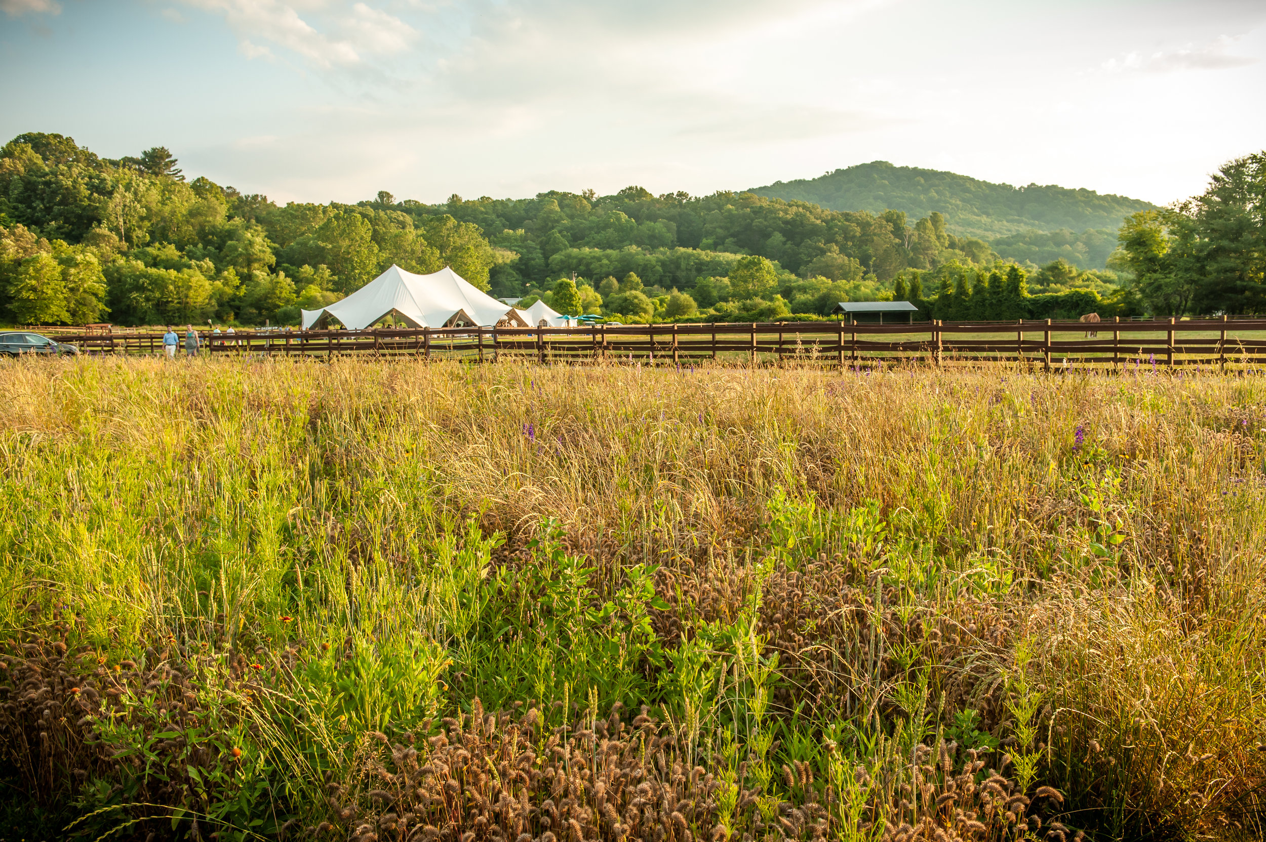Asheville wedding venues junglespirit Choice Image