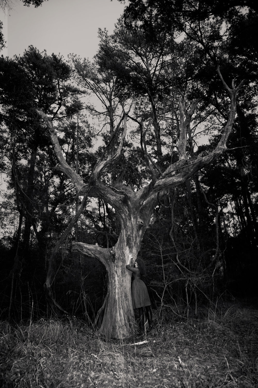 Tree-of-life-0243.jpg