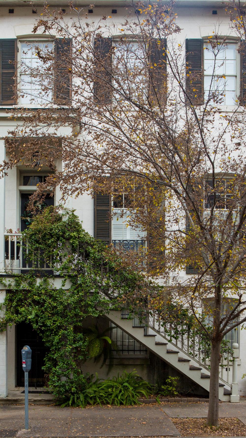 331A5139-Savannah-07.jpg
