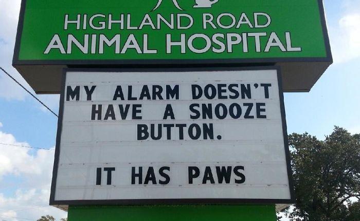 funny-veterinarian-signs-59ae5613380c9__700.jpg