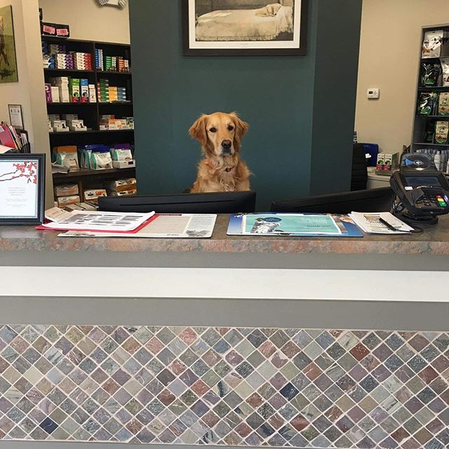 At Emerald City Animal Hospital...Pets Are Family...and Staff! 😂#goldensofinstagram #work