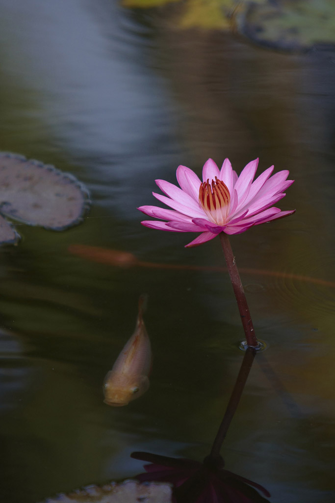 _MG_2367-laos-luang-prabang-lilies-at-national-museum.jpg