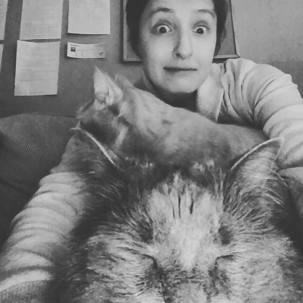Me, trying to write a blog post… - covered in cats.