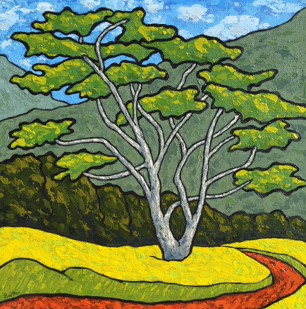 Albiza Tree in Meadow Near Koloa - 12x12