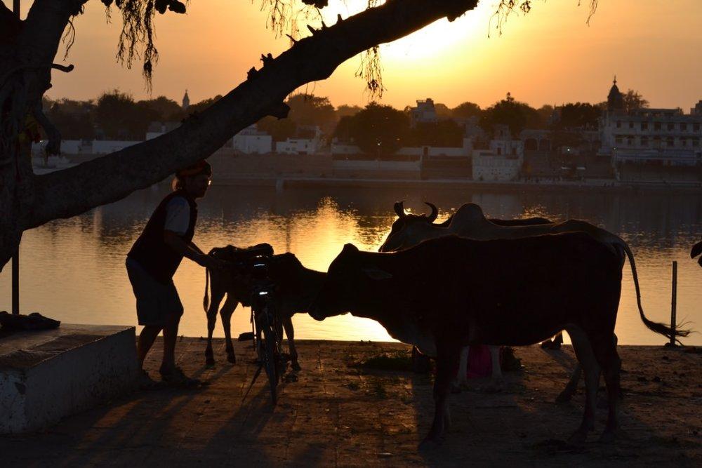 India_Feb_2016_c.jpg