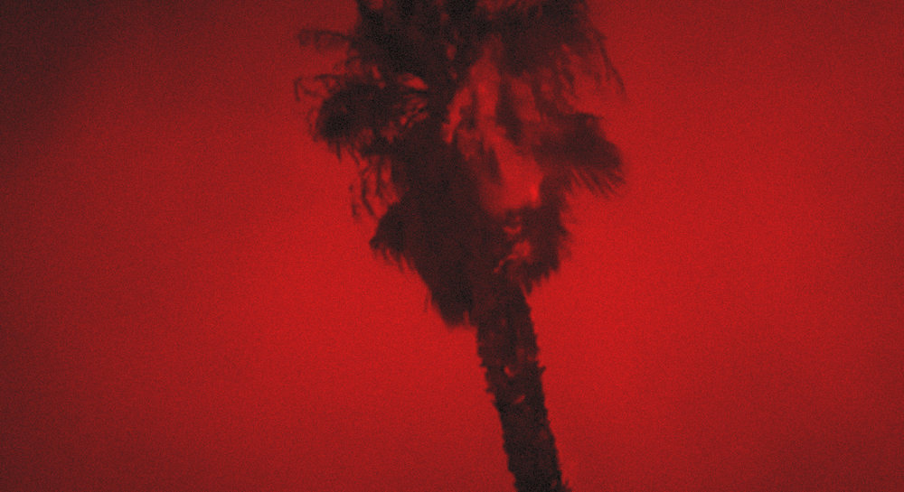 Hell Beach Burning PalmRED.jpg