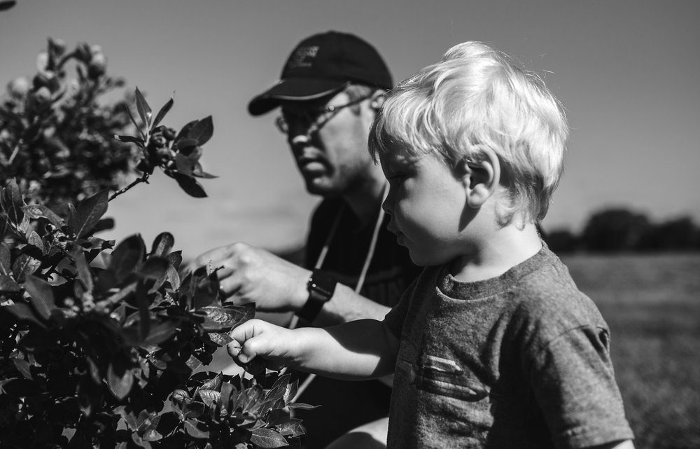 Toddler boy picking blueberries in dappled light, black and white