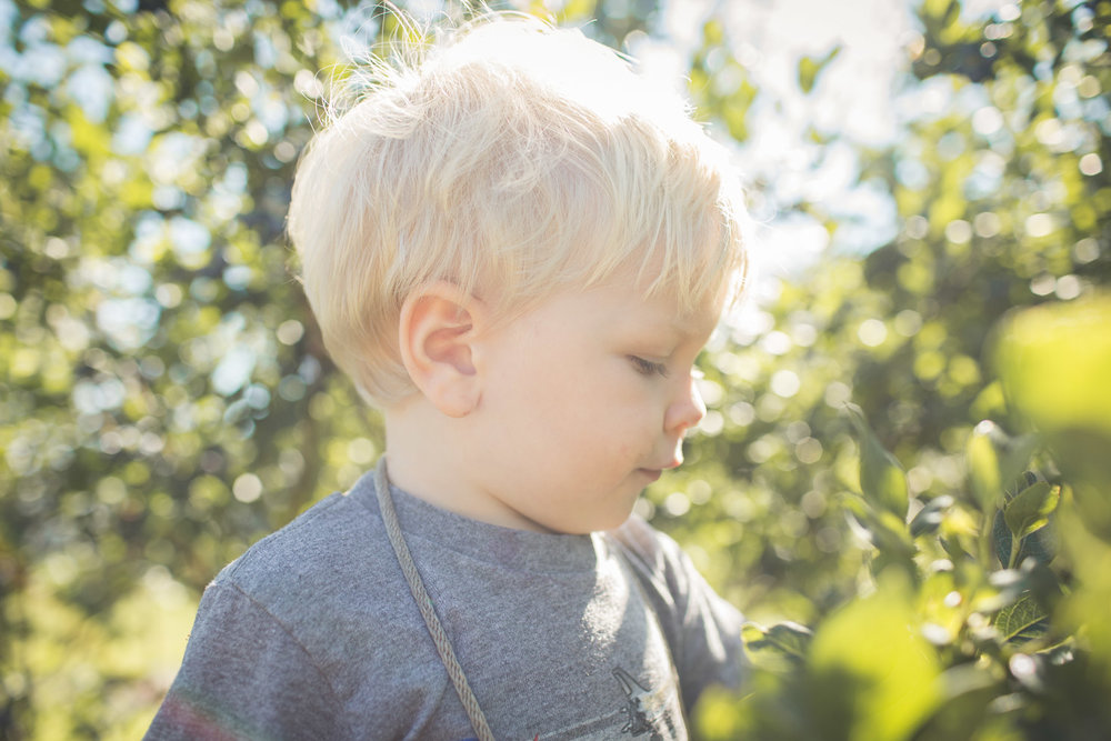 toddler boy soaking in the sun at a blueberry farm