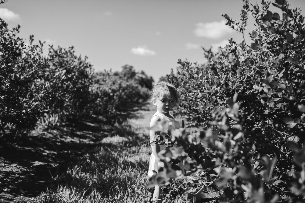 connected, fierce, powerful image of girl on blueberry farm