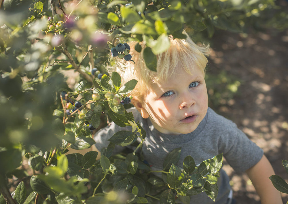 Toddler boy looking up through blueberry bushes