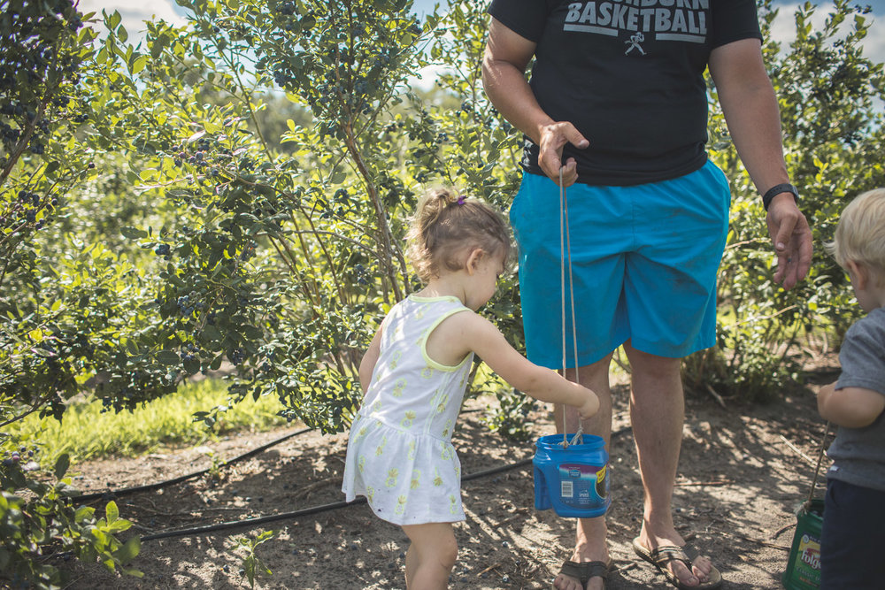 girl dropping blueberries into bucket with father